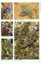 Wildflowers of the Central Highlands of Namibia