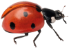Nick Baker's Ladybird World