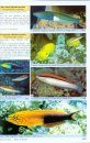 Labridae Fishes: Wrasses