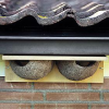 House Martin Nests