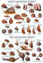 An Illustrated Guide to the Land Snails of Sri Lankan Natural Forest and Cultivated Habitats
