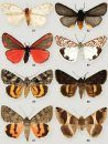 Lepidoptera Research in Areas With High Biodiversity Potential in Italy, Volume 1