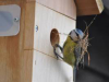 Gardenature Nest Box Camera System - Ultra High Resolution