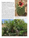 The Cycads, Volume 2: Africa & The Americas