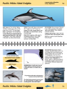 Guide to Marine Mammals and Turtles of the U.S. Pacific