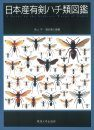 A Guide to the Aculeate Wasps of Japan (2-Volume Set) [Japanese]