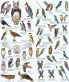 Colombia: Birds / Aves