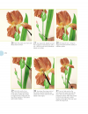 Beginner's Guide to Botanical Flower Painting