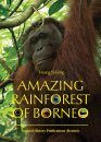 Amazing Rainforest of Borneo