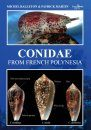 Conidae from French Polynesia