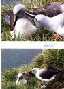 Around the World for Albatrosses