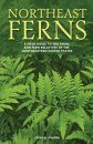 Northeast Ferns
