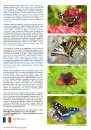 European Butterflies, Issue 3: Spring 2020