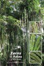 Ferns of Palau
