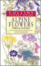 Collins Pocket Guide to Alpine Flowers of Britain and Europe