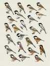 Handbook of the Birds of the World, Volume 12: Picathartes to Tits and Chickadees