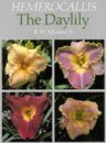 Hemerocallis: The Daylily