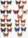 Butterflies of the Afrotropical Region, Part 2