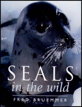 Seals in the Wild