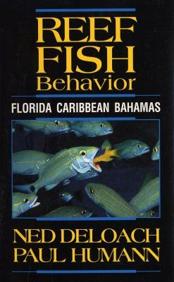 Reef Fish Behaviour
