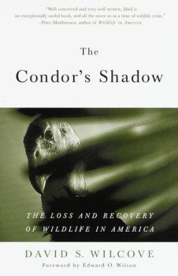 The Condor's Shadow