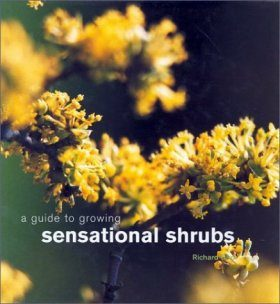 A Guide to Growing Sensational Shrubs