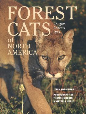 Forest Cats of North America (Region 2 & 4)