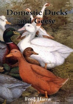 Domestic Ducks and Geese