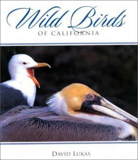 Wild Birds of California