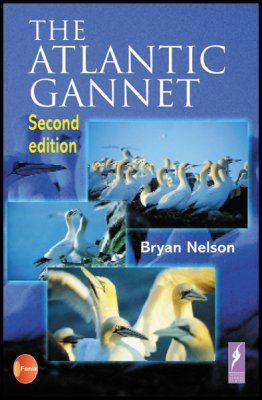 The Atlantic Gannet