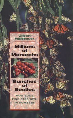 Millions of Monarchs, Bunches of Beetles