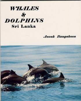 Whales and Dolphins of Sri Lanka