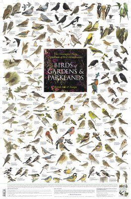 Birds of Gardens and Parklands: British Isles and Europe - Poster