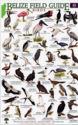 Belize Field Guides: Birds [English / Spanish}
