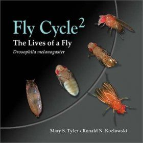 Fly Cycle2