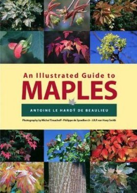 An Illustrated Guide to Maples