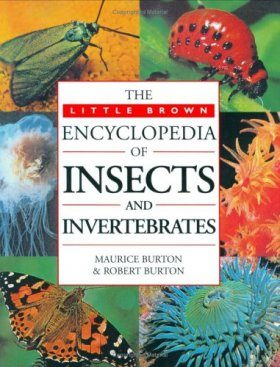 Little, Brown Encyclopedia of Insects and Invertebrates