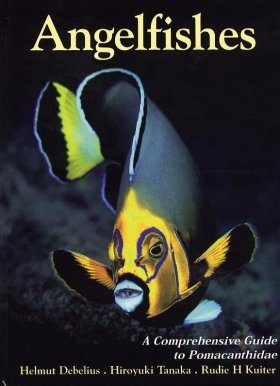 Angelfishes: A Comprehensive Guide to Pomacanthidae