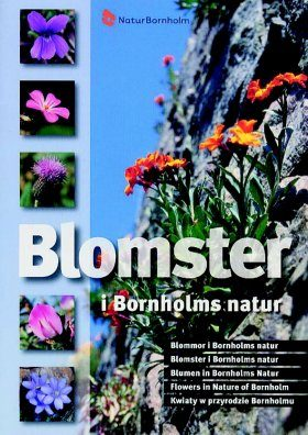 Flowers in Nature of Bornholm