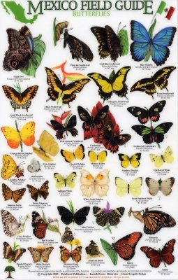 Mexico Field Guides: Butterflies