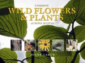 Common Wild Flowers and Plants of Nova Scotia