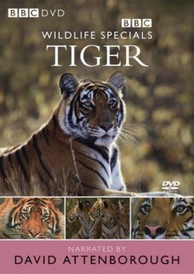 Tiger - DVD (Region 2 & 4)