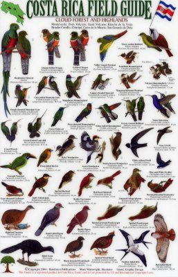 Costa Rica Field Guide: Birds of the Cloud Forest and Highlands [English / Spanish]