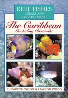 Reef Fishes Corals and Invertebrates of the Caribbean