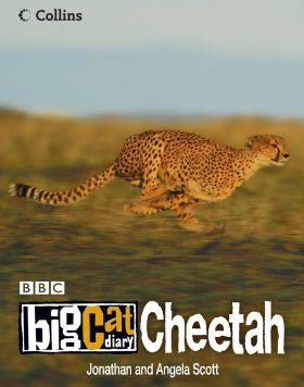 Big Cat Diary: Cheetah