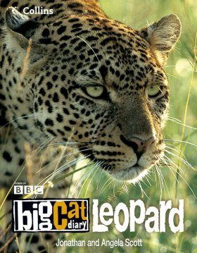 Big Cat Diary: Leopard