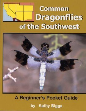 Common Dragonflies of the Southwest