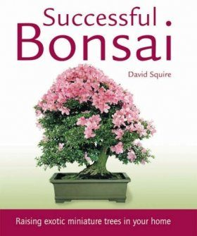Successful Bonsai