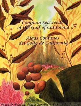 Common Seaweeds of the Gulf of California / Algas Communes del Golfo de California