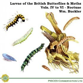 Larvae of the British Butterflies & Moths: Volume 4 to 6 - The Noctuae